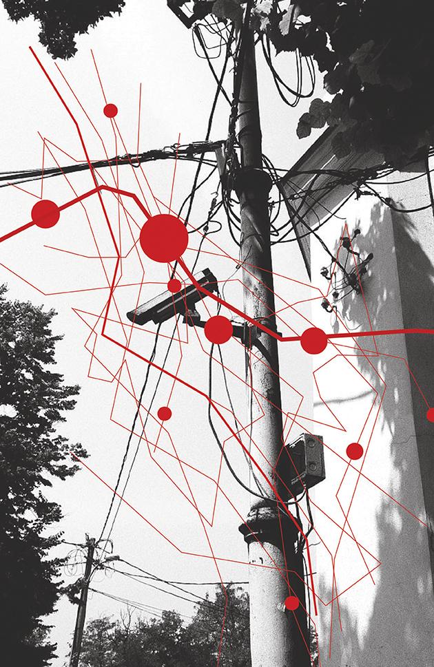mreže-tijana